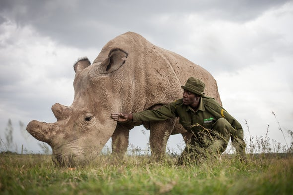 Northern White Rhinos Are about to Die Out--Should We Save Them?