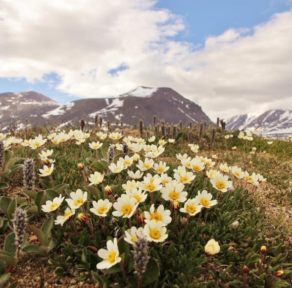 Arctic Pollinator Faces Uncertain Future