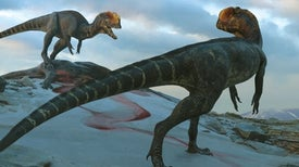 The Real Dilophosaurus Would Have Eaten the Jurassic Park Version for Breakfast