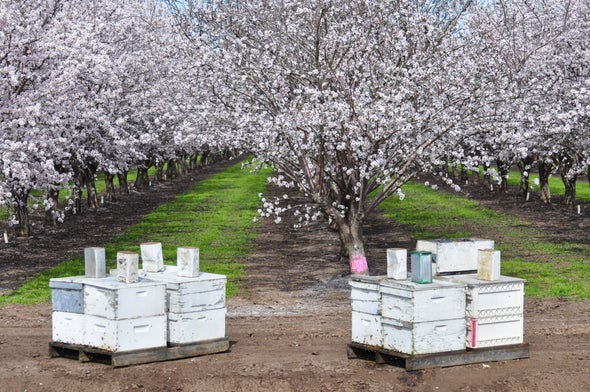 In-Hive Sensors Could Help Ailing Bee Colonies