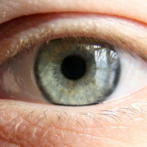 Peeper Show: Evolution's Eyes [Slide Show]