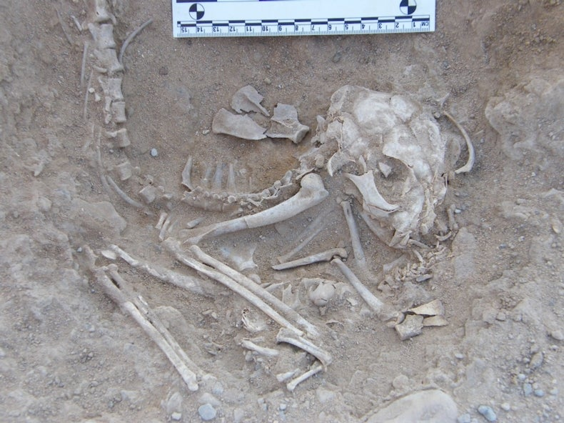 Ancient Egyptian Kitten Skeletons Hint at Earlier Cat Domestication