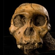 Spectacular South African Skeletons Reveal New Species from Murky Period of Human Evolution