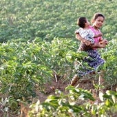 A Cambodian girl, Lynn, carries her brother, Stevie across a cassava field at Pailin near the Thai border.