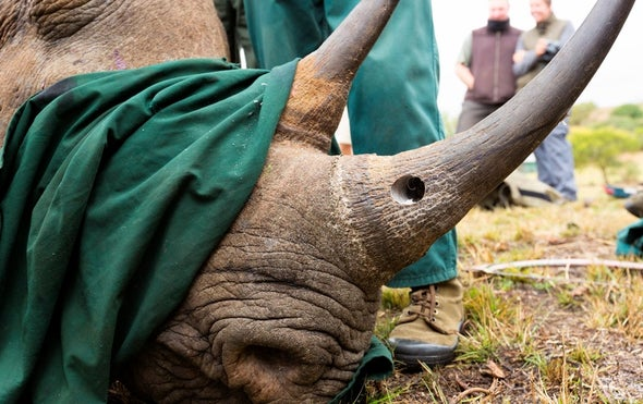 Rhino Poachers Prosecuted Using DNA Database