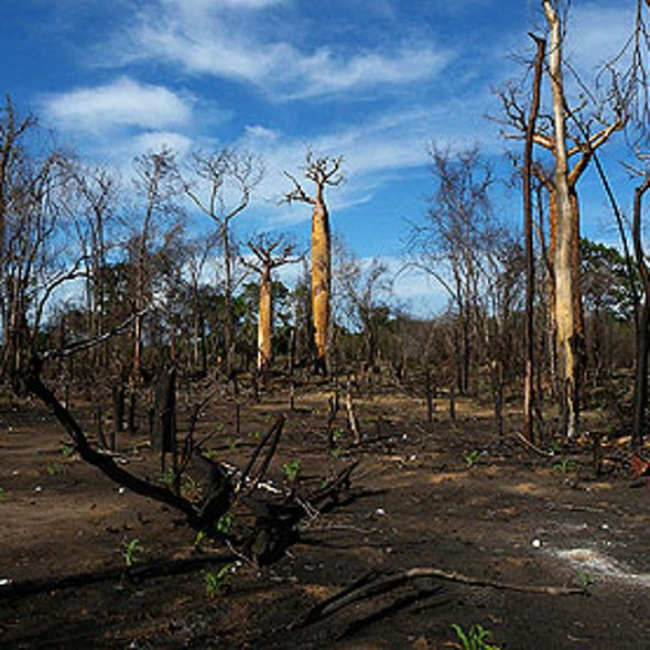 Ban on Trans Fats Could Accelerate Deforestation
