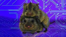 """Homing In on the Brain's """"Cuddling"""" Circuitry"""