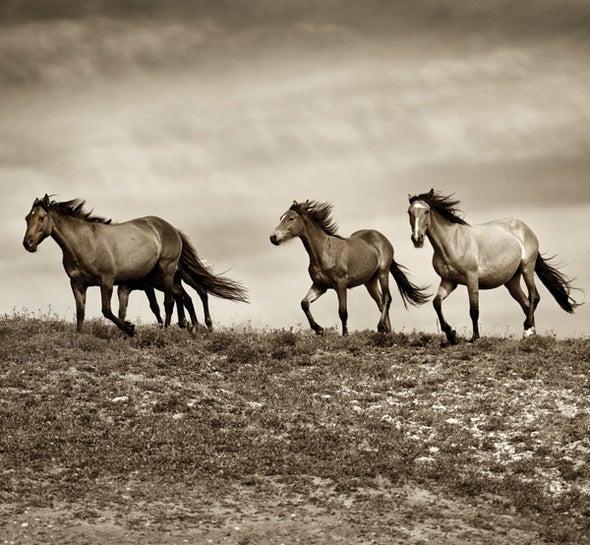The Secret Lives of Horses