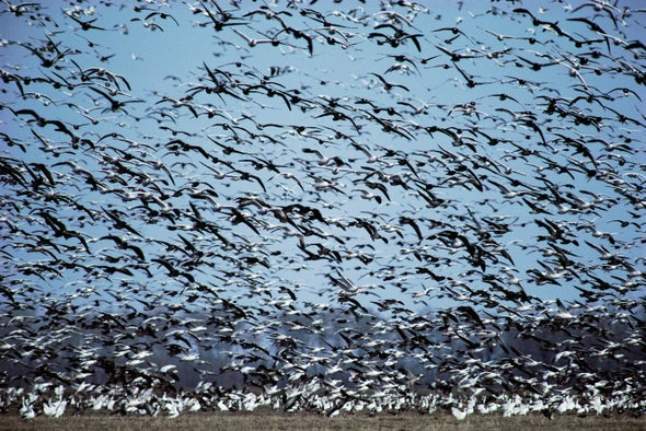 Animal Migrations Track with Wikipedia Searches