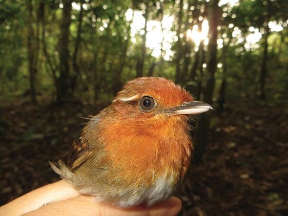 Birds' Eye Size Predicts Vulnerability to Habitat Loss