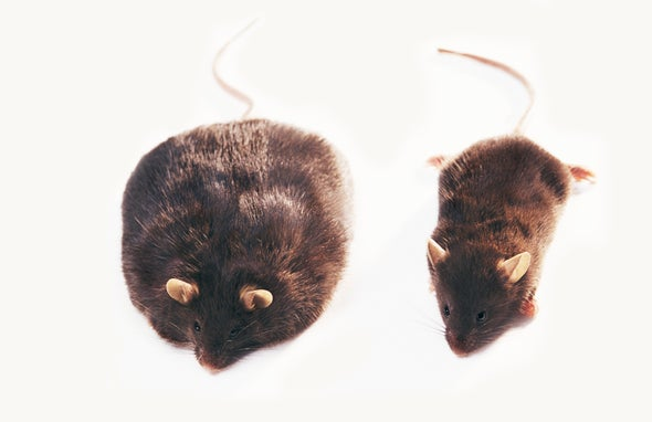 New Players in the Obesity Puzzle: The Brain's Glial Cells