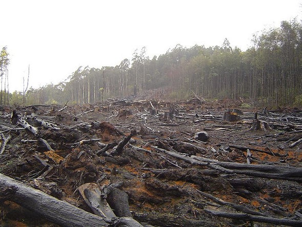 Controversy over Biofuels and Land Cut from IPCC Summary