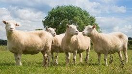Spry Dolly Siblings Could Make Clone Skeptics Sheepish