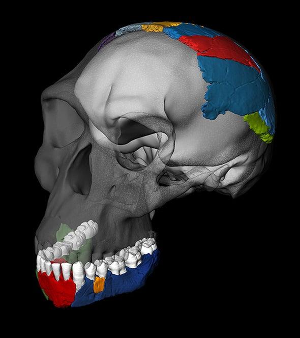 Jawbone Fossil May Mark Dawn of Humankind
