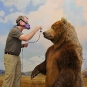 New Technology Saves Old Dioramas [Slide Show]