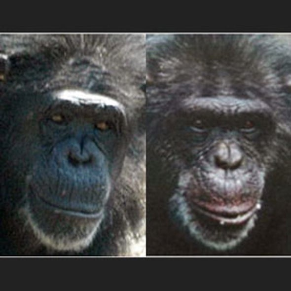 Sussing Out Simians: Humans Can Accurately Size Up a Chimp's Personality after Viewing Its Face