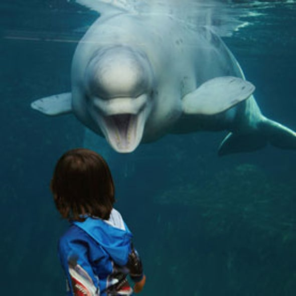 Captive Beluga Whale Imitated Human Voices