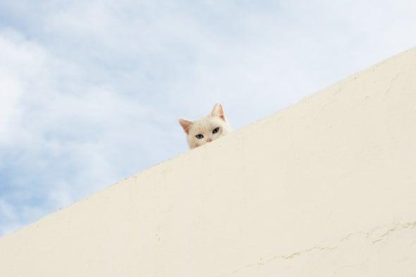 猫认得自己的名字,但可能不会回应。