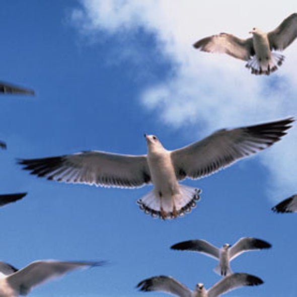 Can We Keep Airplanes Safe without Killing So Many Birds?