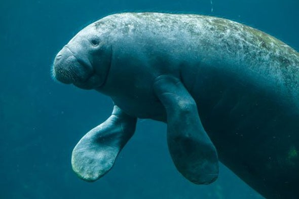 How Many Manatees Are There? There's an Algorithm for That
