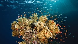 Rapid Heat-Stress Test Identifies Resilient Corals