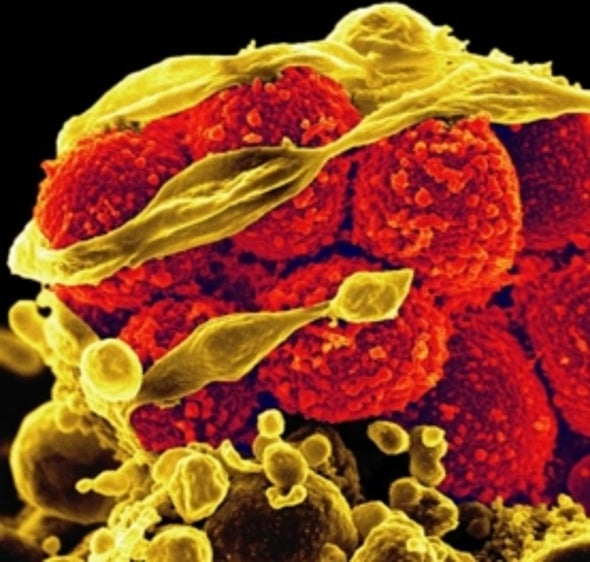 U.S. Congress Moves to Block Human Embryo Editing