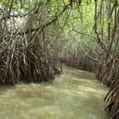 HOT SPOT LOSER: MANGROVE FOREST