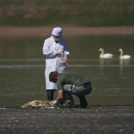 bird-flu-sample-collection-in-mongolia-2005