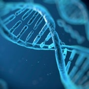 DNA with Man-Made Bases Functions Just Fine