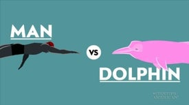 An Olympic Showdown: Human versus Dolphin