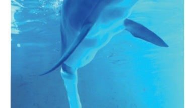 A Dolphin's Tale: How Researchers Gave One Bottlenose a Prosthetic Tail