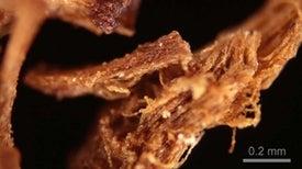 Recipe for Mummies Balm Is Older Than the Pharaohs