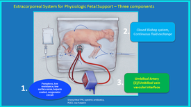 Brave New Wool? Artificial Womb Sustains Premature Lambs for Weeks