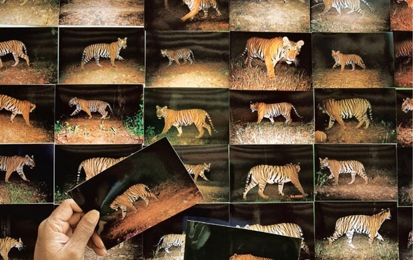 The Trouble with Tiger Numbers
