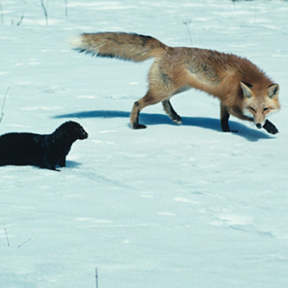 What Impact Has Activism Had on the Fur Industry?