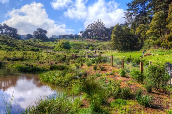 Ecological Detectives Hunt for San Francisco's Vanished Waterways