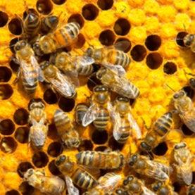 Bees Work Wonders When Babies Need Them