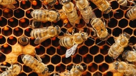 Why Don't Bees Celebrate Father's Day?
