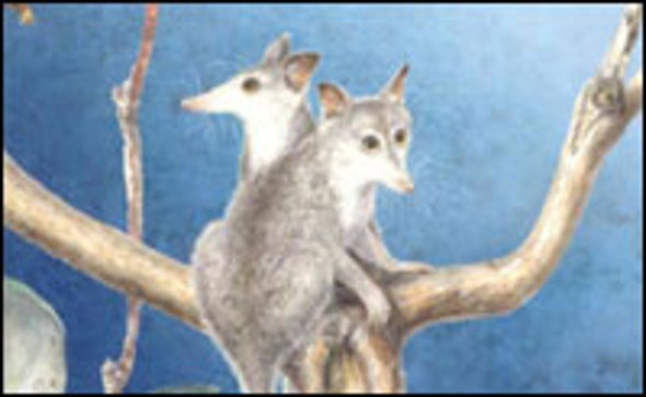 Oldest Known Ancestor of Marsupials Discovered in China