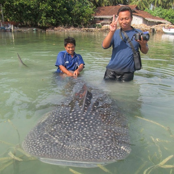 Report of Protected Species Catch Shows Fishermen's Growing Trust of Conservationists