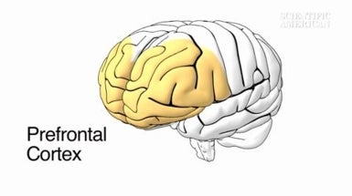 Social Cues in the Brain