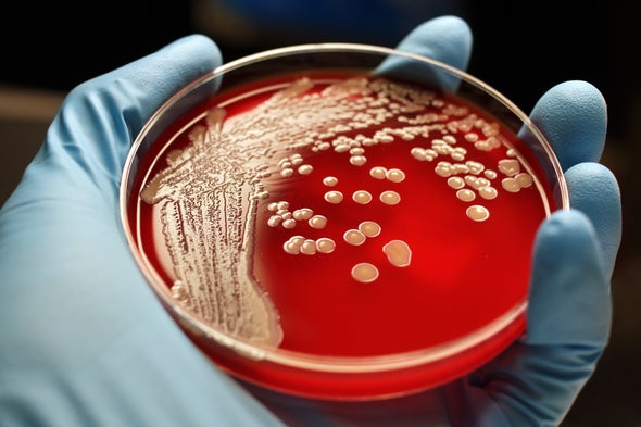 Superbug Explosion Triggers U.N. General Assembly Meeting
