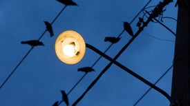 Light Pollution Is Causing Birds to Nest Earlier--Which Might Not Be a Bad Thing