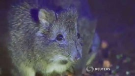 Public, Private Partners Come to Potoroo Rescue