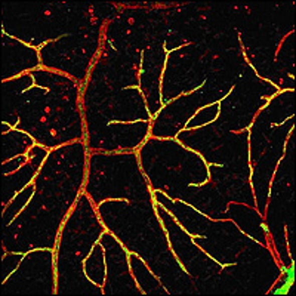 New Recipe for Powerful Stem Cells Promises Greater Insight