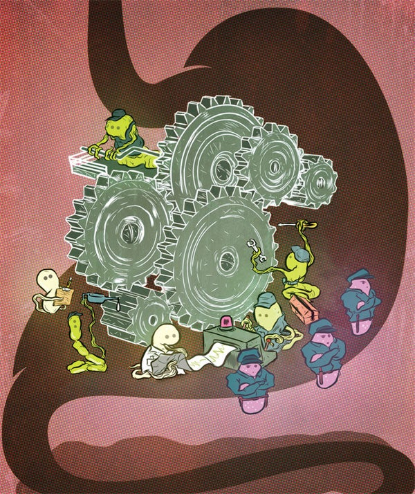 How Gut Bacteria Help Make Us Fat And Thin Scientific American