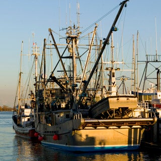Stock Options: Fishing for the Catch of the Day--And the Future