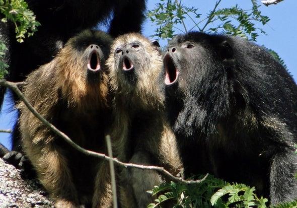 Howler Monkeys Trade Testicles for Decibels