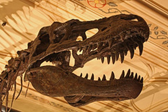 Meet the New Tyrannosaurs [Video]