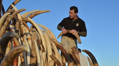 Conservationists Dig In on Pandas, Oceans and Elephant Ivory